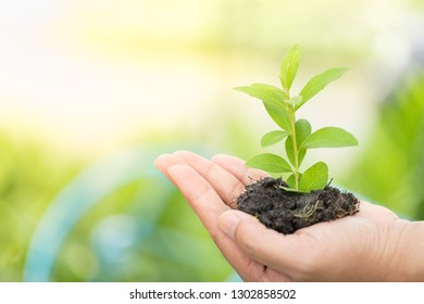 Hands holding growing plant on blurred greenery background with copy space for text using as background natural green plants, ecology, fresh wallpaper, protect nature concept.