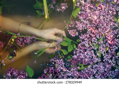 Hands Holding Lilac in the Water