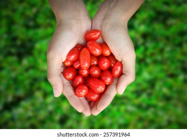 Hands Holding Little Roma Tomatoes