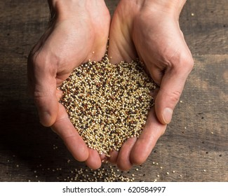 Hands holding mixed quinoa