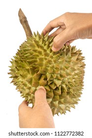 Hands Holding and Peeling Fresh Ripe Durian Isolated on White Background. One of The Most Popular Fruits in The World and King of Fruits in Thailand.