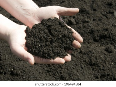Hands holding a pile of soil above the ground.