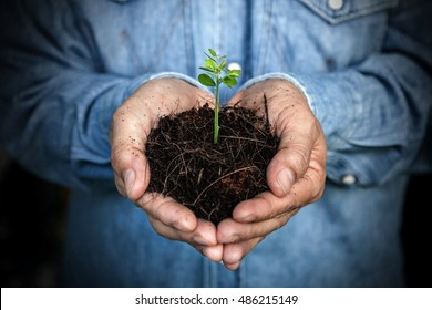 Hands holding plant. Ecology concept