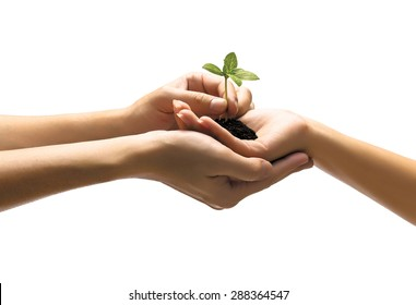 Hands holding plant on white background