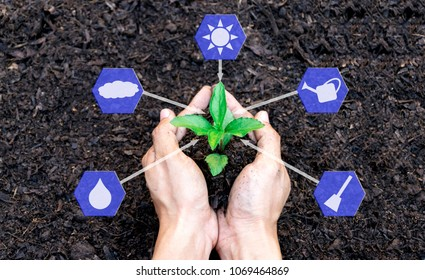 hands holding a plant sapling with the environment planting icon technology