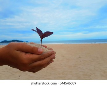 Hands holding a purple sapling with sea and beach view