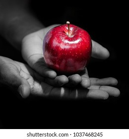 Hands holding a red apple, the forbidden apple, in black background.