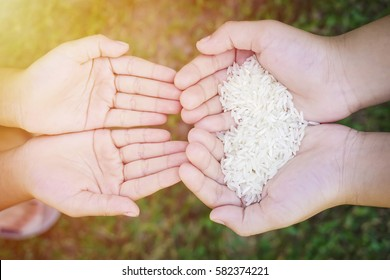 Hands holding rice with green grass as background with flare effect