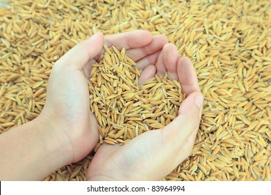 hands holding rice with heart sign