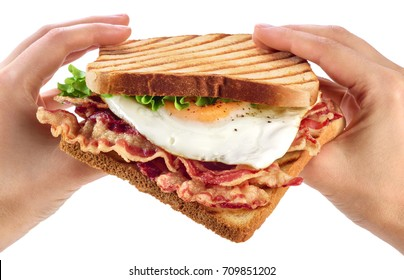 Hands holding a sandwich with bacon fried egg and lettuce salad on white background. Breakfast.