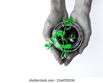 Hands holding sapling glass bottle , Black and green Composition copy space for save the earth green concept