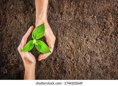Hands holding sapling in soil. Top view.