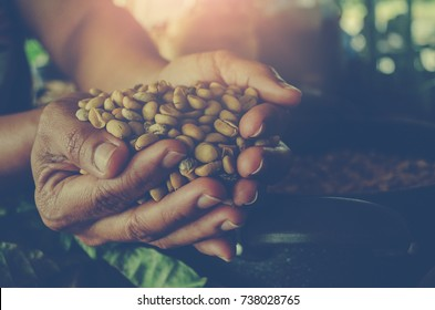 Hands holding scoop of coffee beans Autumn harvest and healthy organic food concept Toned picture Farm Agricultural products