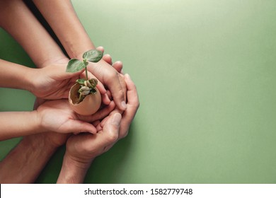 hands holding seedling in eggshells, montessori , CSR , Eco green sustainable living,zero waste, plastic free, earth day, world environment day,responsible consumption, eco emergency