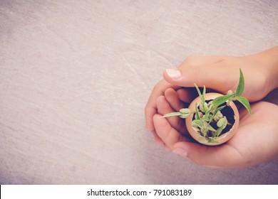 hands holding seedling plants in eggshells, eco gardening,  montessori, education, reuse, CSR concept