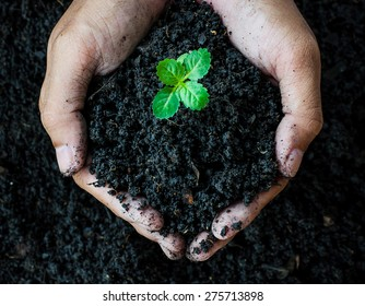 Hands holding soil with young plant.