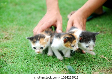 hands holding three domestic kittens