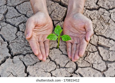 hands holding tree growing on cracked earth /hands growing tree / save the world / environmental problems / love nature / heal the world / cut tree