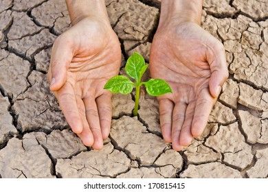 Hands holding tree growing on cracked earth / save the world / environmental problems / love nature / heal the world