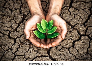 hands holding tree growing on cracked earth / Save the world / environmental problems / love nature