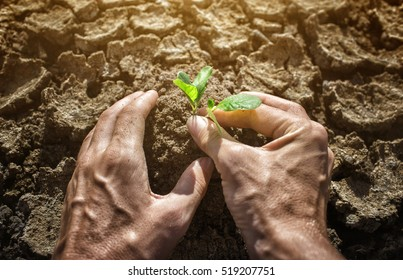 hands holding tree growing on cracked earth,environmental problems,love nature,growing tree on crack ground