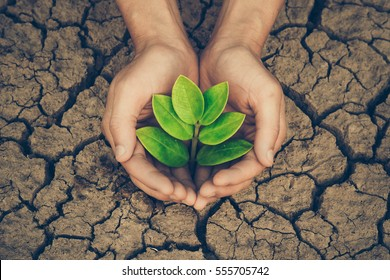 Hands holding a tree growing on cracked ground / Save the world / Environmental problems / Protect nature