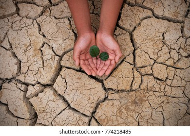 Hands holding a tree growing on cracked ground. Crack dried soil in drought, background texture, concept drought and crisis environment.