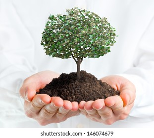 Hands holding a tree with money