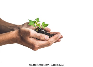 Hands holding young green plant, Isolated on white. The concept of ecology, environmental protection.