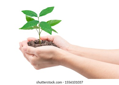 Hands holding a young plant, Isolated on white background, clipping path. Concept of Environmental and Ecology protection.