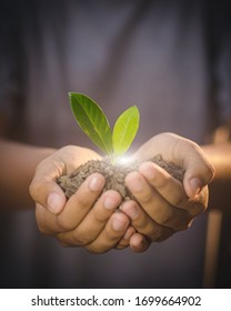Hands holding  young plant in nature background