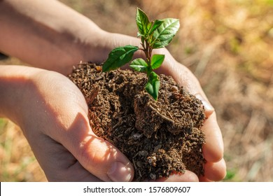 Hands holding young plant on blur  nature background with sunlight. Eco earth day concept. Eco friendly. Save the planet.