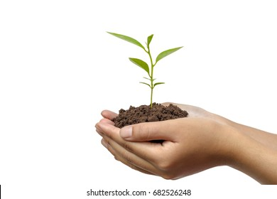 Hands holding a young plant in soil isolated on white background