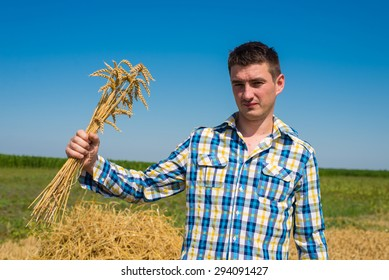 Hands holding young wheat