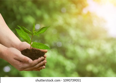 Hands holds plant, eco concept
