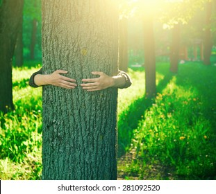 Hands hugging a trunk of a tree in summer park or forest with sunlight. Ecology, loving nature concept