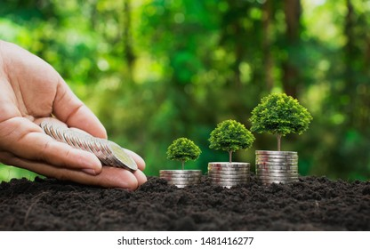 The hands of investors are delivering coins to the trees planted on coins, financial concepts and financial growth.