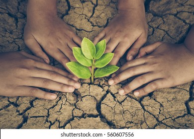 Hands joining together around a tree growing on cracked earth / Protect nature