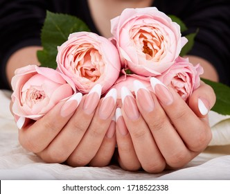 Hands with long artificial french manicured nails holding pink rose flowers