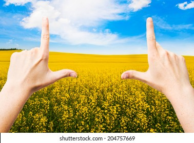 Hands making a frame in a Canola Field