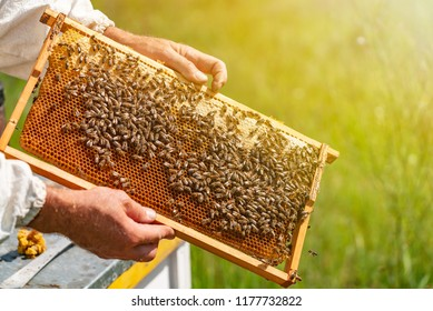hands of man shows a wooden frame with honeycombs on  the background of green grass in the garden