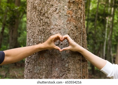 Hands of a man and a woman forming a heart shape around a big tree - protecting and love nature