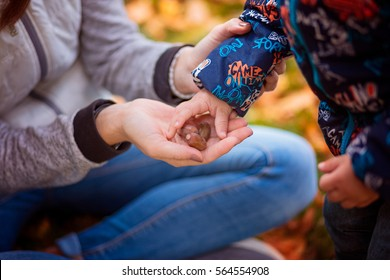 Hands mom and baby acorns closeup