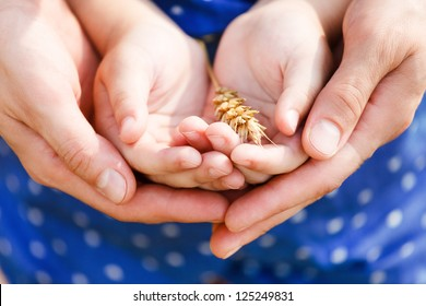 Hands of a mother and her little daughter holding wheat. Concept