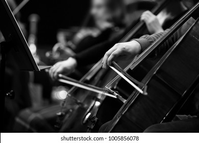 The hands of a musician playing the cello in the orchestra in black and white tones