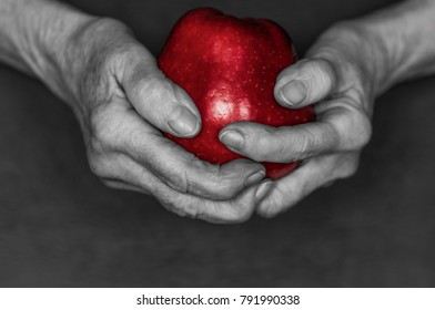 Hands of an old woman hold a red apple in front of black background, color key red./Hands hold a red apple