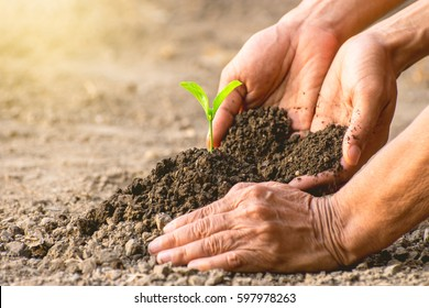 The hands of the old woman and the young man's hands are helping to plant the seedlings in the dry soil, ecology concept.