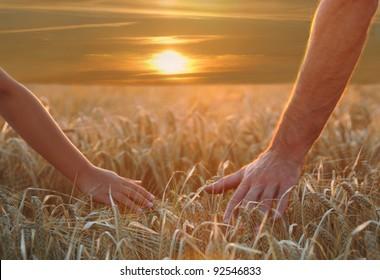 Hands on harvest