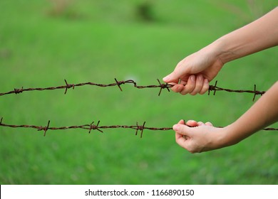 Hands Open Barbed Wire Outdoors On Green Backgraund