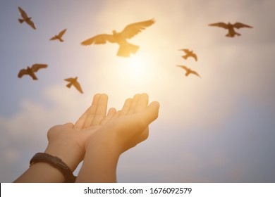 Hands open palm up worship with birds flying over sunrise background. Catholic praying for blessing from god.